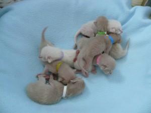 Group 2 - Birth